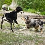 Kleine Hunderassen brauchen Auslauf